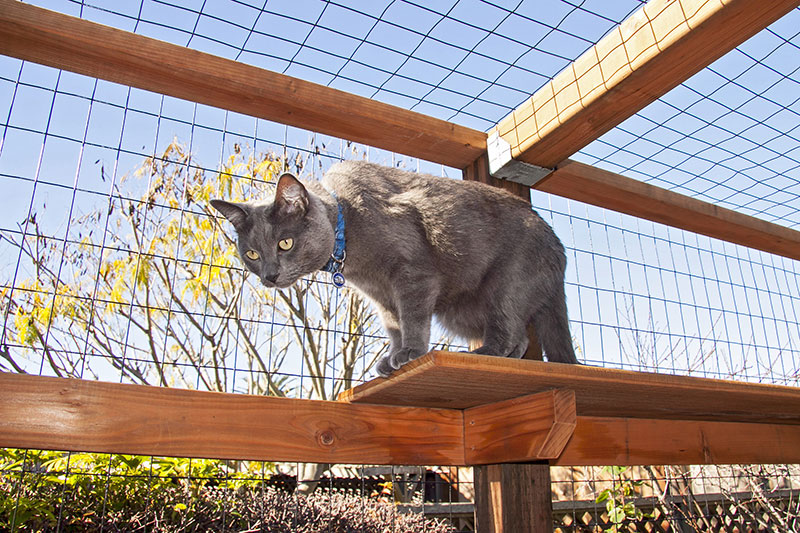 """Catio"" The Outdoor Cat Enclosure"